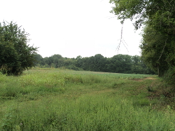 Cultivated field on the trail leading to the Trail of Tears segment at Old Jefferson